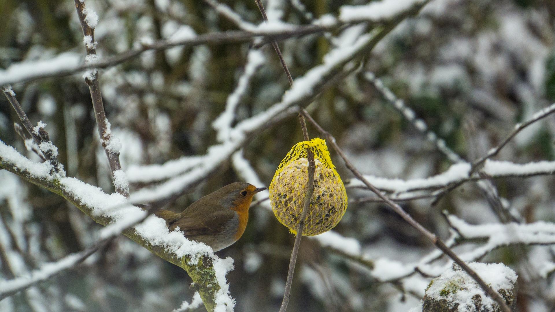 tips om je tuin in de winter te onderhouden